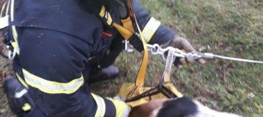 Porečki vatrogasci spasili psa iz jame
