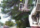 Tehnička intervencija -uklanjanje stabla