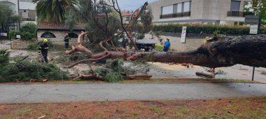 Tehnička intervencija-palo stablo u Novom naselju Poreč
